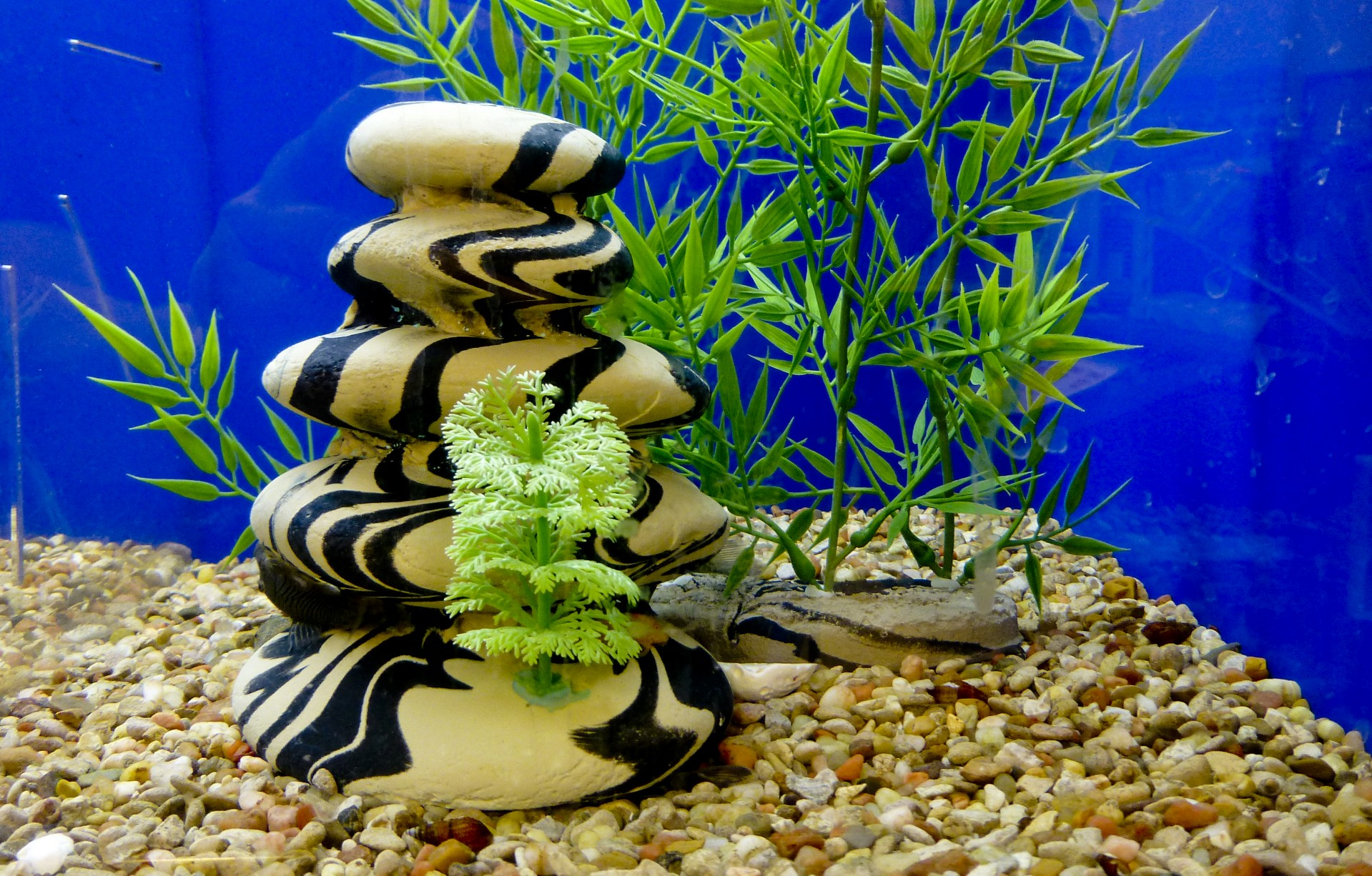 Måling av vannkvalitet i et akvarium