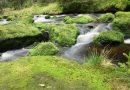 Harepest i vann ute i naturen